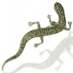 brosa din argint salamandra
