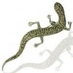 Brosa din argint cu marcasite salamandra